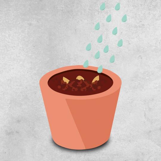 Arrosage semis