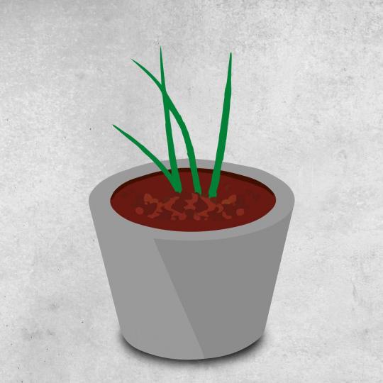 Repiquage herbes aromatiques